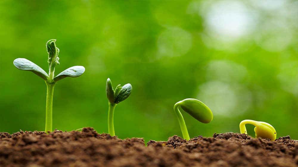 Câu chuyện của hai hạt mầm - Hạt giống tâm hồn