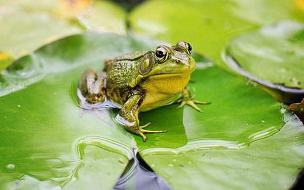 Có 5 con ếch trên 1 chiếc lá hoa súng, 1 con quyết định nhảy, hỏi còn lại bao nhiêu con?