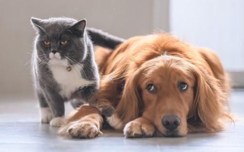 'Hiệu ứng đá mèo' rất dễ gây tai họa, đáng tiếc là mới chỉ có 1% trong chúng ta biết cách tránh